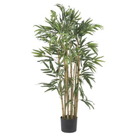 3 foot black tree 3 foot multi bambusa bamboo tree potted 5279