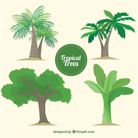 tropical tree palm tree vectors photos and psd files free