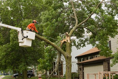 tree work aerial tree work wright hennepin electric