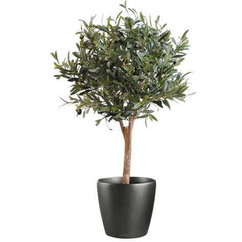 arbres mediterraneens oliviers artificiels factice artificielles reflets nature lyon