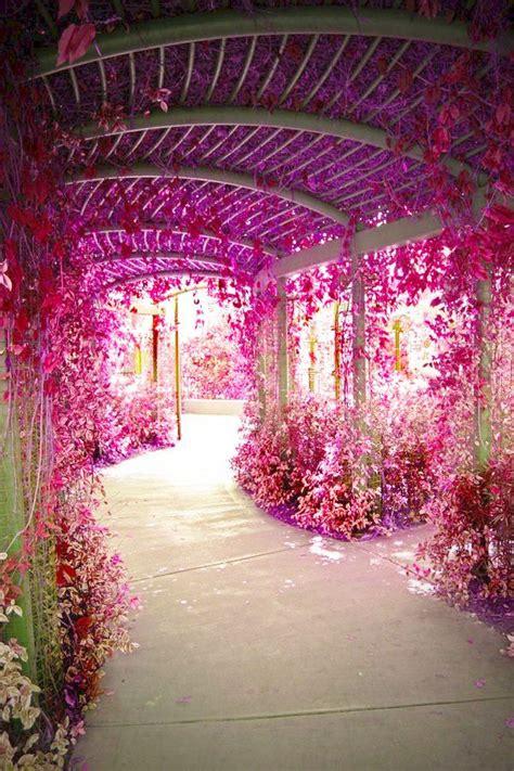 flower tunnel flower tunnel my garden