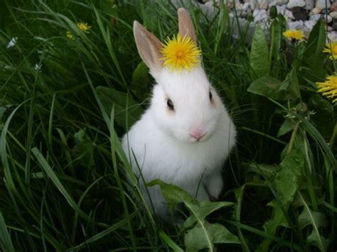 flower and bunny file bunny flower jpg live school idol festival
