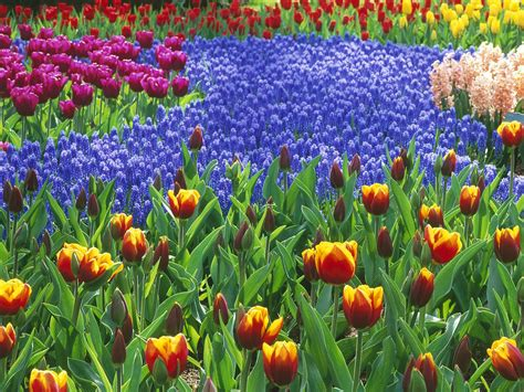 flowers gardens pictures theonlineflowergarden 5 simple steps to start a