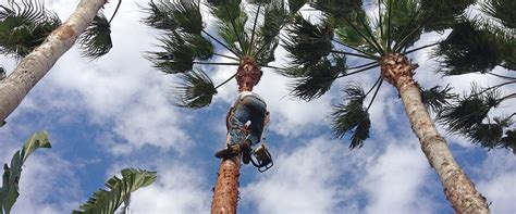 tree sales melbourne best tree services in melbourne 28 images tree