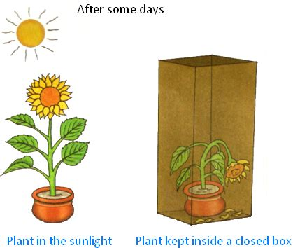 which plants can survive without sunlight plants can survive without sunlight can any plants live