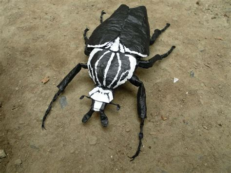 origami beetle living with insects exploring the intersections of