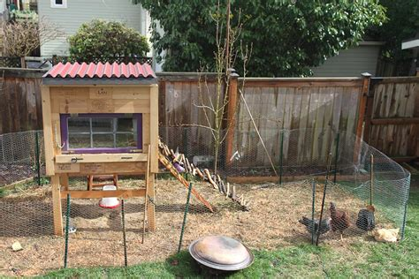 my backyard chickens raising backyard chickens for dummies modern farmer