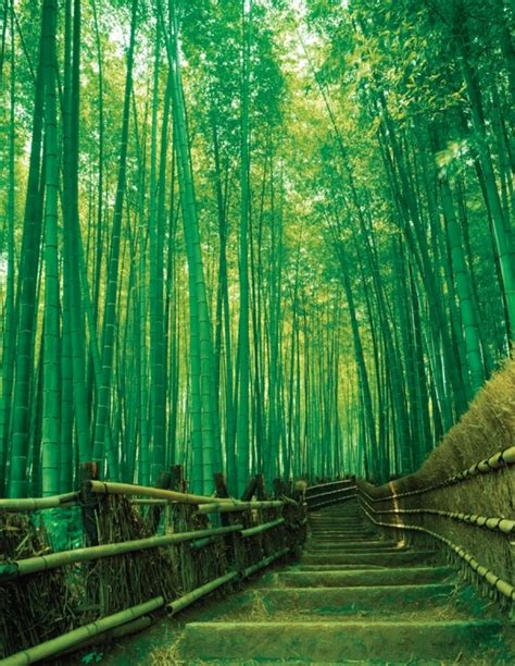sagano bamboo forest japan 7 national forests to lose