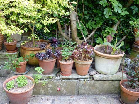 garden pots pot plants the enduring gardener
