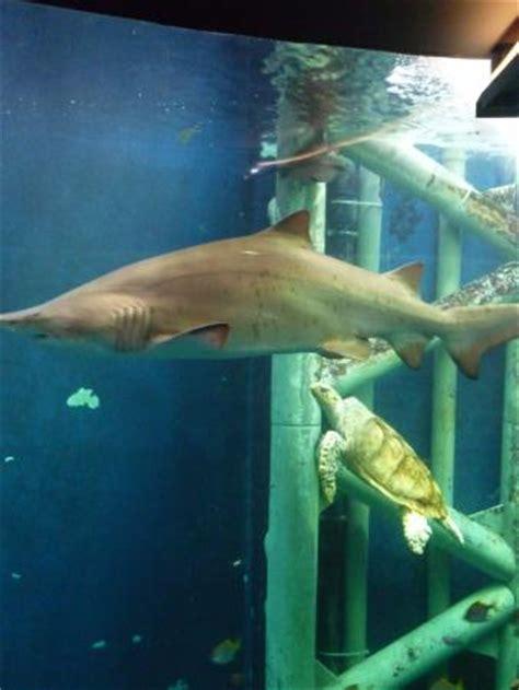 aquarium st malo picture of grand aquarium malo