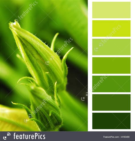 green swatches green color swatches image