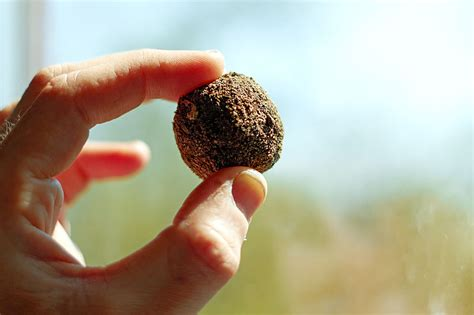 how seed are made clay studio how to make seed bombs with clay
