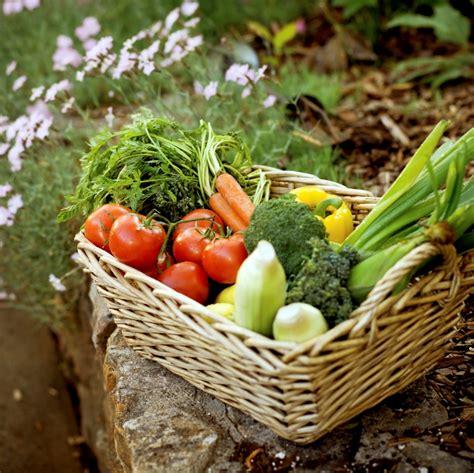 growing vegetable garden organic gardening the home garden