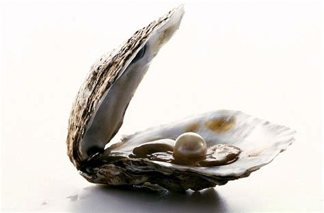 pearl uk msn oyster pearl