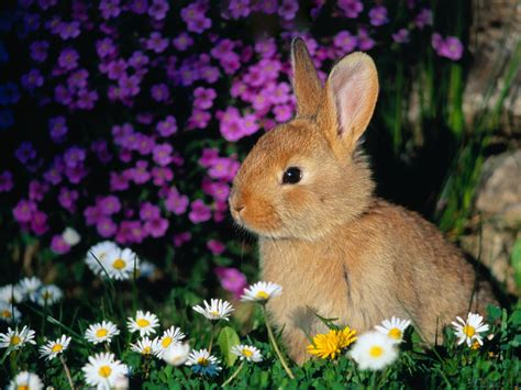 flower and bunny cutest bunny pic poll results baby bunnies fanpop
