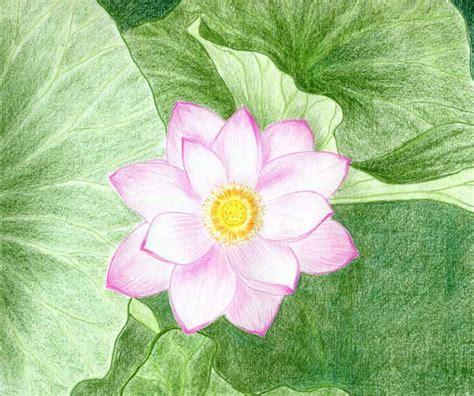 flower simple lotus flower drawings made easy