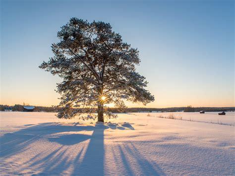 winter trees winter tree way up
