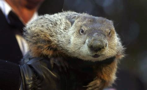 groundhog day of 5 facts about groundhog day the morning call