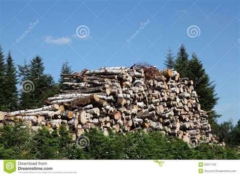 woodworking resources resources wood timber stock photo image 20217722