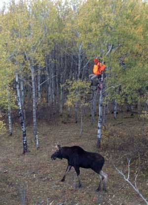 where can i get a tree stand deer safety harness deer get free image about