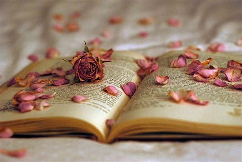beautiful pictures of books beautiful book creative lol roses image 312669 on