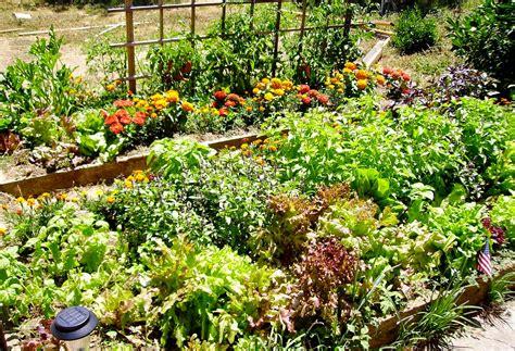when to plant vegetable garden garden how to plant a vegetable garden