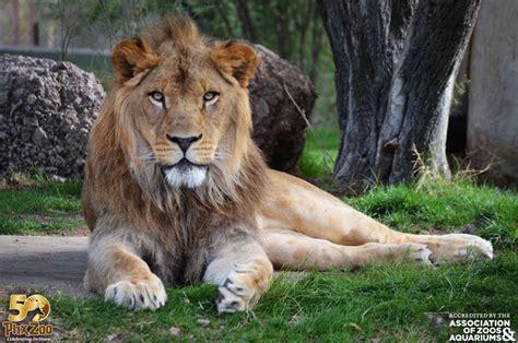 zoo animals may 16 zoo kindness safari