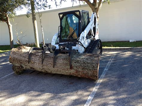 tree sale melbourne tree service in melbourne florida with tree removal sales