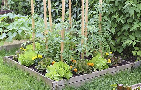 tips for planting a vegetable garden tips and tricks for planting a vegetable garden this