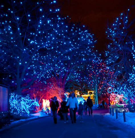 denver zoo zoo lights events in denver denver