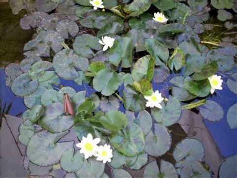 Der Innere Garten by Meditation Der Innere Garten Www In Balance