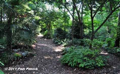 rock garden plants for shade 100 rock garden plants for shade rock garden