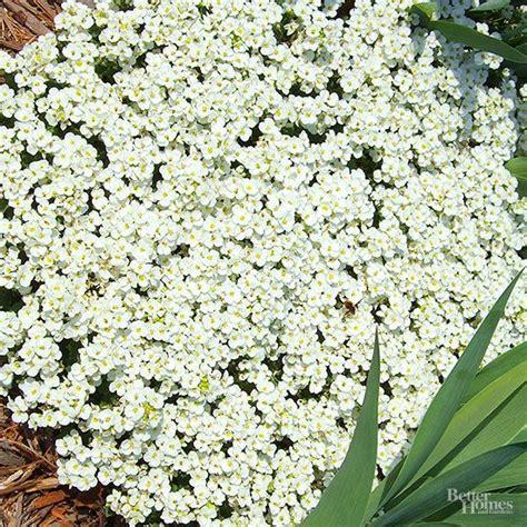 best plants for rock gardens best 25 sun plants ideas on sun