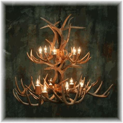 whitetail deer antler chandelier hidalgo whitetail antler chandelier 24 antler 12 light