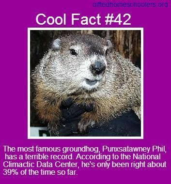 groundhog day information groundhog day facts pictures photos and images for