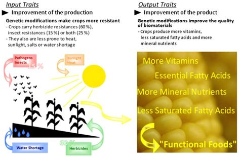 Genetically Modified Definition Crops by Genetically Modified Crops Advantages