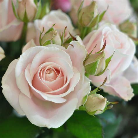 rosary made from roses roses s bazaar amanda flowers