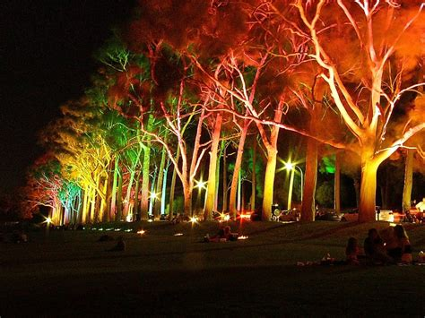 lighting trees tree of light light talk