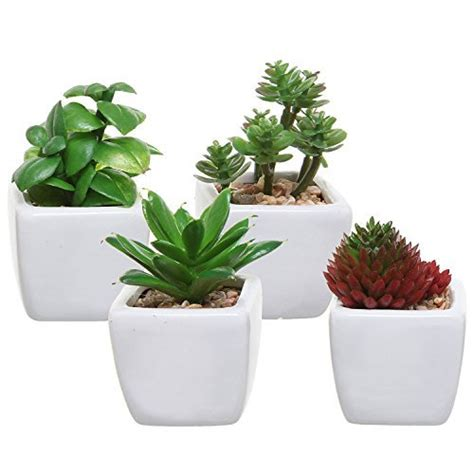 plants for the office office desk plant
