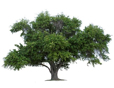tree pic why on earth plant an tree quinta mazatlan