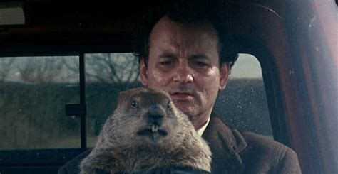 groundhog day en francais top 5 netflix recommendations of the week absolutely