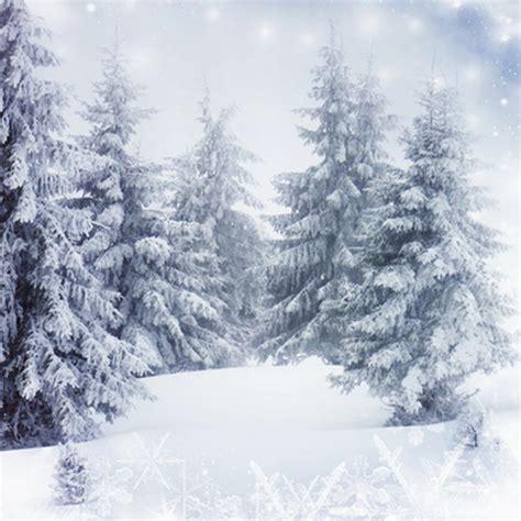 cheap trees canada get cheap white pine photo aliexpress