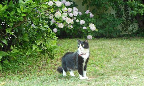 pr 233 parer votre chat d int 233 rieur aux visites 224 l ext 233 rieur wanimobuzz