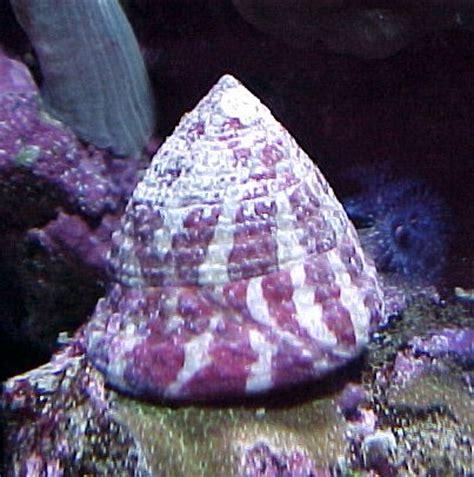 aquarium eau de mer escargot