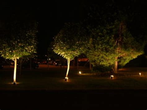 lights for trees outside tree lights