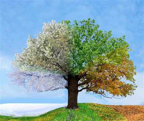 chagne trees leaders choose your season