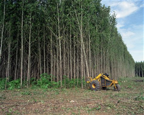 harvesting trees geotimes august 2005 weighing in on renewable energy