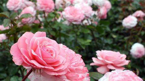 most beautiful flower garden file most beautiful flower gardens in canada butchart