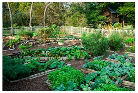 amazing vegetable gardens amazing vegetable gardens www pixshark images