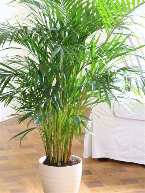 mejores plantas de interior las 17 mejores plantas de interior jardiner 237 a